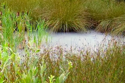 Vegetable oil from Anglian Oils turned a Downham Market watercourse dirty white (picture: Environment Agency)