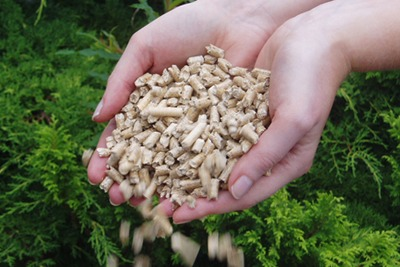 15,800 biomass boilers would be installed under DECC's grant scheme if they were the sole technology to benefit. Photo courtesy of ConFor.