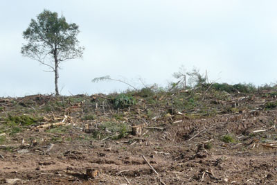 Forest cleared for biomass product in Nova Scotia, Canada. RSPB says growing demand for biomass could lead to unsustainable practices (photo: Canadian Parks and Wilderness Society)