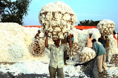 Cotton harvest in Mali (photo: Better Cotton Initiative/Daouda Traoré)
