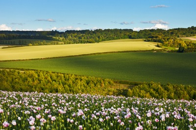Chilterns, England (photo: dreamstime)