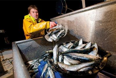 Fresh fish (picture: Sainsbury's/Guy Harrop)