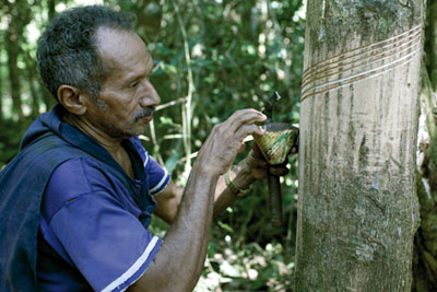 Sky's project supports rubber tappers, who extract natural latex from rubber trees (picture: Sky)