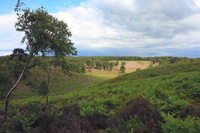 Lowland heath on restored land at Cemex UK's Rugely quarry in Staffordshire (photograph: Mineral Products Association)