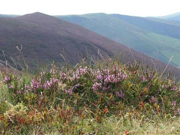 Glaslyn nature reserve. Credit: Montgomeryshire Wildlife Trust