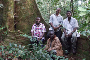 The Gola forest in Sierra Leone will be one of recipients of the Together for Trees partnership (RSPB)