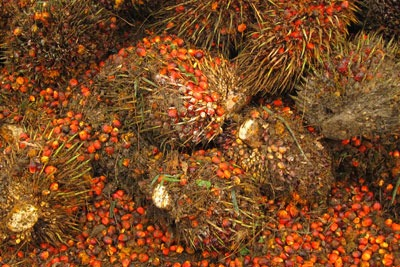 Currently, 25% of palm oil imports in the UK are sustainable