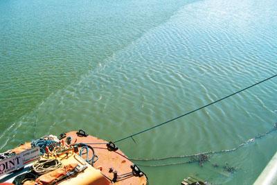 Sewage was spilt into the Plym estuary (photo: Environment Agency)