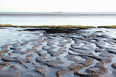 Able's project involves reclaiming 45 hectares of the Humber estuary, including intertidal mudflats which are important foraging sites for birds (photograph: Paul Glazzard, CC by SA 2.0)
