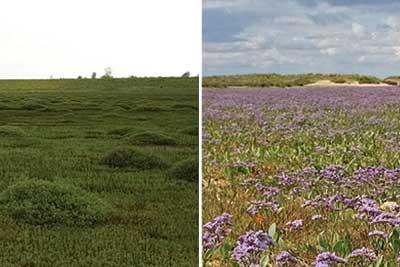 Left side shows man-made marshland, the right show natural marshland. Credit: Alastair Grant/ David CJ White