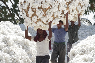 Cotton pickers. Credit: Marks & Spencer