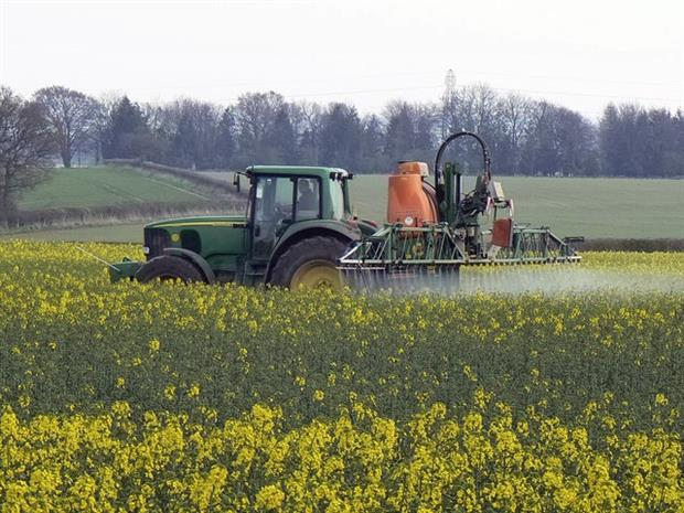 EFSA advises against use of neonicotinoid pesticides in bee-attracting crops such as oiseed rape (photograph: Brian Robert Marshall, CC by SA 2.0)