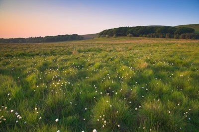 Lancashire acid grassland (photograph by SBP/Alamy)