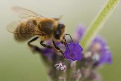 Evidence is growing that pesticides can harm bee populations