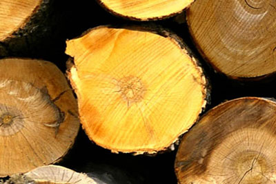 New law banning illegal timber to enter force on 3 March