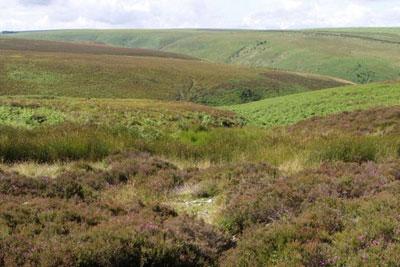 Exmoor peat land. Credit: Derek Harper