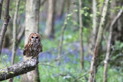 English forest. Credit: Chris Lorenz/ Dreamstime.com