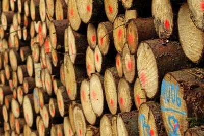 There are concerns over the impact of biomass burning on the climate and timber prices (photograph: Jochenschneider/Dreamstime.com)