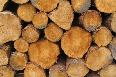DECC is capping subsidies for biomass under the Renewables Obligation at 400MW of total installed capacity (photograph: Walter Baxter, CC by SA 2.0)