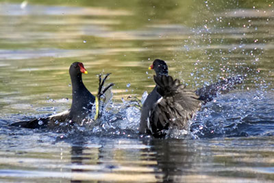 An EU exit means the UK need not comply with directives on birds and water quality (photograph: Simon Whitehouse/Dreamstime.com)