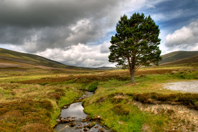 Scotland's biodiversity strategy backs UK efforts to account for natural capital (photograph by Michal Osmenda, CC by SA 2.0)