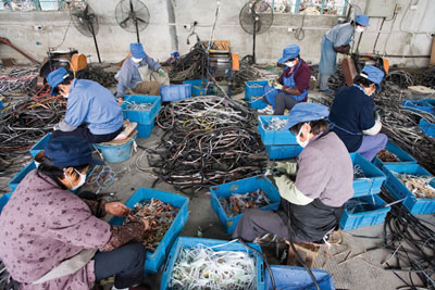 Shanghai, China: workers at the Taicang Port Imported Recyclable Resources Processing Zone (credit: Aurora Photos/Alamy)