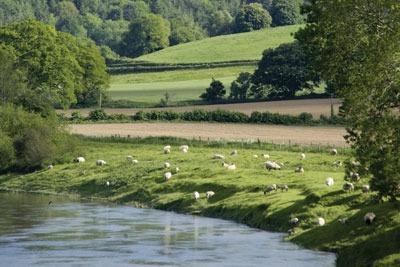 Farmland. Credit: David Martyn/ Dreamstime.com