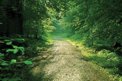 Forest path. Credit: Shutter1970/dreamstime.com