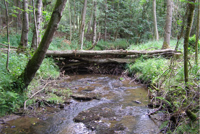 Large woody debris dams are used to help control water during high flow conditions (photograph: Forest Research)