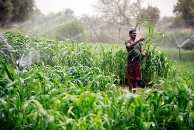 SABMiller India has embarked on a natural recharge project in Rajasthan to protect the water supply for the Rochees brewery and local farmers (Photograph: SAB Miller)