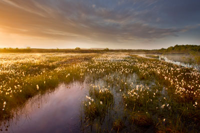 Ballynahone bog: DEFRA is trialling a peatland carbon code (photograph: Ben Hall)