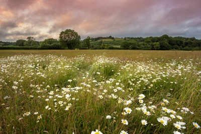 English meadow. Credit: Anna Curnow, Dreamstime.com