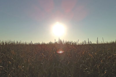 Crops growing in a field. Credit: The friendly fiend/ CC BY SA 2.0