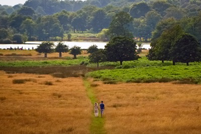 Richmond Park, London: planting trees near cities provides benefits estimated to be worth half a billion pounds to the UK (photograph: Gary Knight, CC by SA 2.0)