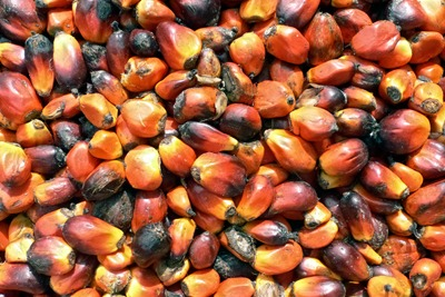 Many EU and north American RSPO members aim to be using 100% certified palm oil by 2015 (photograph: oneVillage Initiative, CC by SA 2.0)