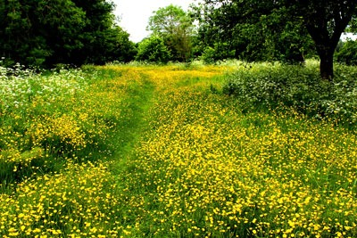 English meadow. Credit: Leshaines123_CC BY 2A