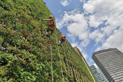 The Rubens Hotel in London has a 350 cubic metre living green wall. Credit: Red Carnation Hotels