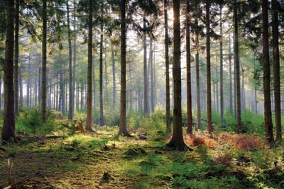 The Queen's Speech was criticised for not including legislation to protect UK forests. Credit: Scotbot/CC BY 2.0