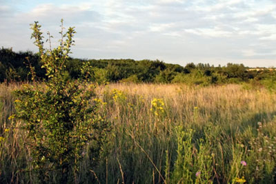 Biodiversity offsets will be used to negate the loss of a field to make way for a 47-home development in Thaxted, Essex, but the loss of green space for locals will not be so easily replaced (photograph: Doug Fry)