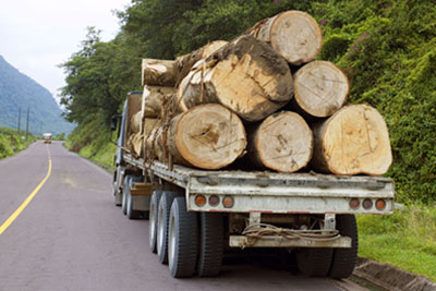 Trucking timber from the Amazon over the Andes in Ecuador (photograph: Morley Read/123RF)