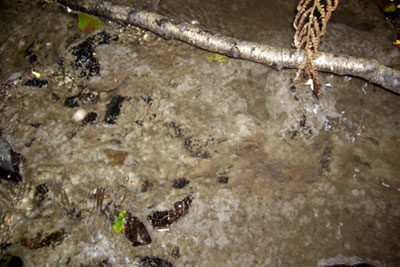 Sewage was discharged into three rivers (photograph: Environment Agency)