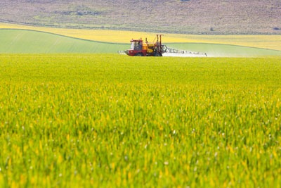 Neonicotinoids: the UK is resisting a ban (photograph: Anthony Brown/123RF)