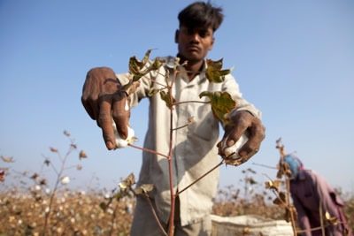 Every year, 20 million tonnes of cotton is produced across 90 countries (photograph: CottonConnect)