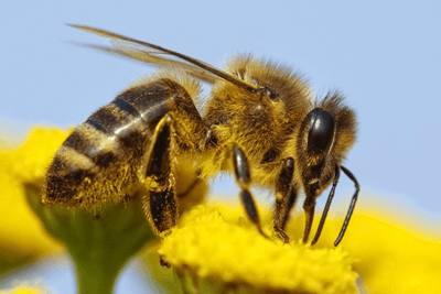 Pollinator strategy: no pesticide targets (photograph: Daniel Prudeck/123RF)