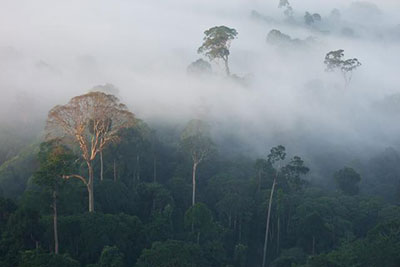 Each year an average of 13 million hectares of forest disappears (photograph: Katherine Secoy/Global Canopy Programme)