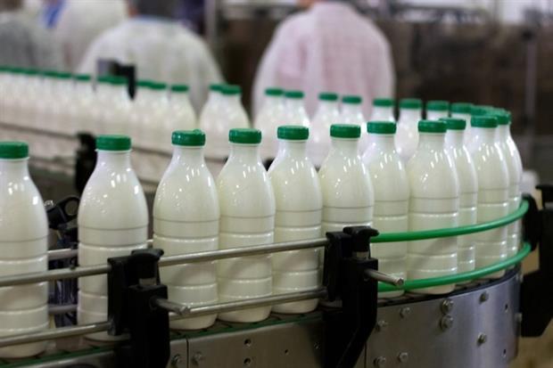 Dairy Plant Conveyer Belt