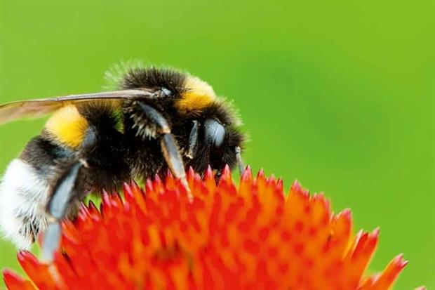 Study reappraises bees and neonicotinoids (photograph: Johnny Devil/123RF_