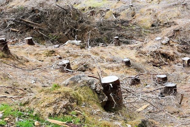 In Scotland, 7,600ha of trees were planted, missing a 10,000ha target (photo: ©Phaendin-Chuenmongkolsakul_123RF)