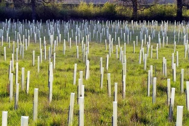 Plummeting tree planting rates will have adverse environmental effects (Photograph: Michael Lane/123rf)