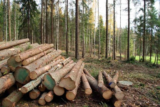 Between 10% and 20% of wood consumed in the UK could be illegal (photograph: Taina Sohlman/123RF)